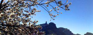 fiesta del almendro en flor en Gran Canaria